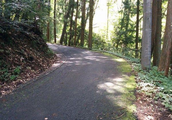 大棚山真福寺に向かう道路