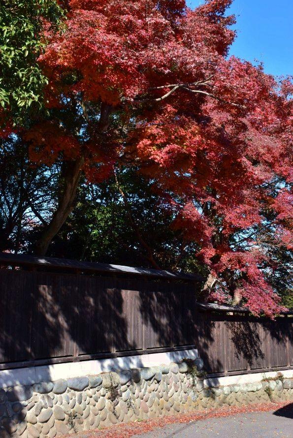 賀茂神社周辺の紅葉