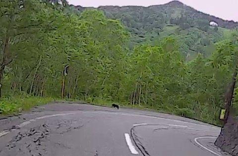 万座ハイウェーに熊発見