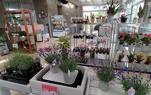 山の花屋の店内の様子