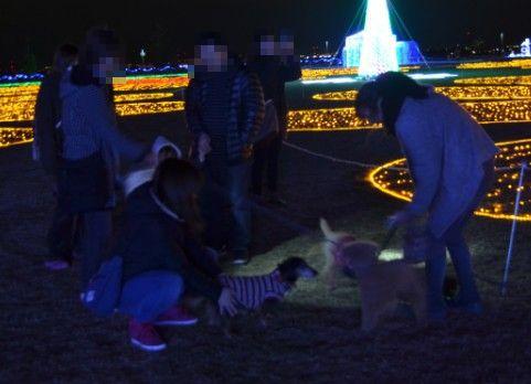 犬連れでのイルミネーション