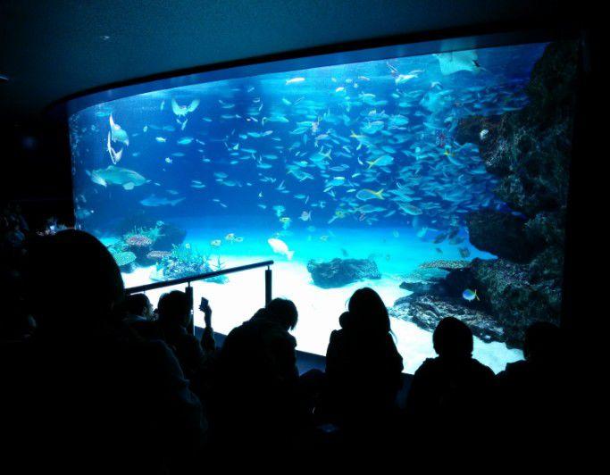 巨大水槽と魚たち