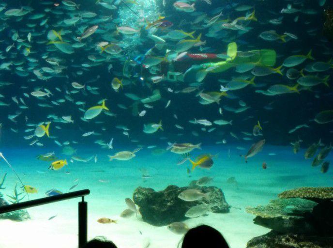 ダイバーと魚たち