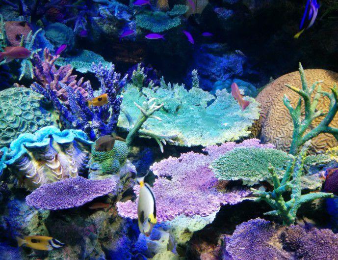 熱帯魚とサンゴ礁