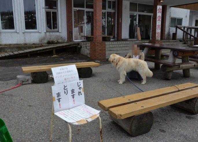 渋峠ホテル前の犬