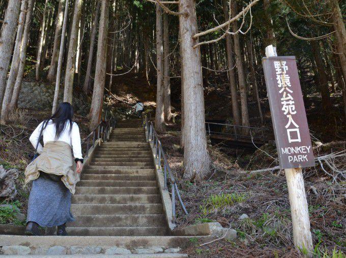 野猿公苑入口前の階段