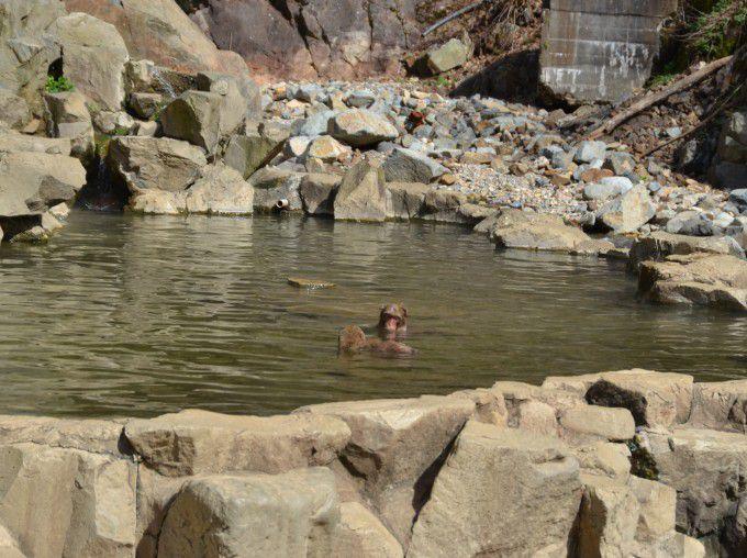 温泉に浸かる日本猿