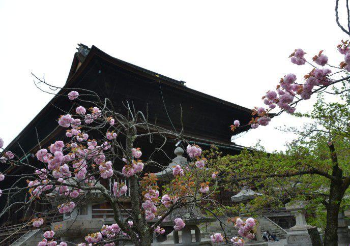 桜と善光寺