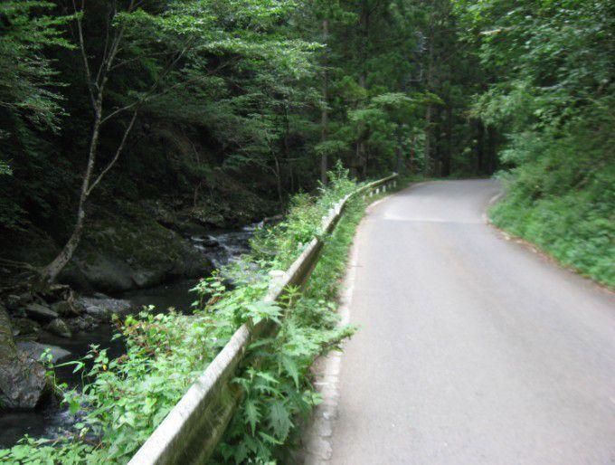 桐生川源流林の風景