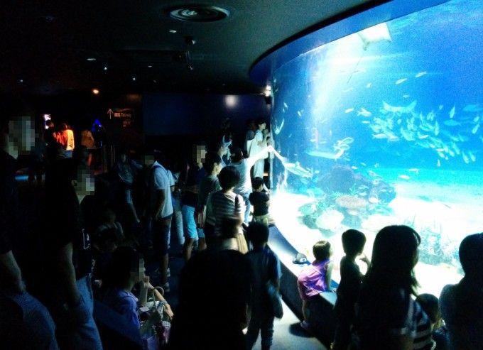 巨大水槽を見てる観光客