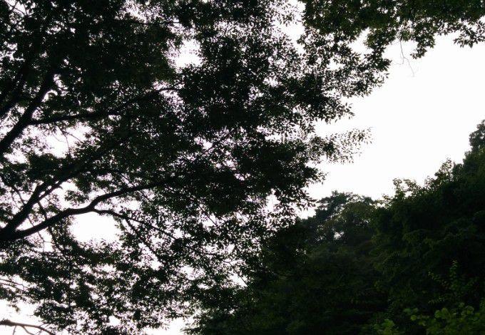 野天風呂から見上げる木々と空