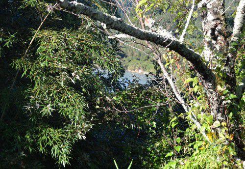 天守台から天竜川を見る