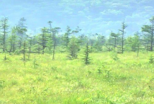 夏の戦場ヶ原