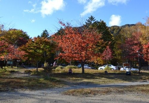 駐車場側の紅葉