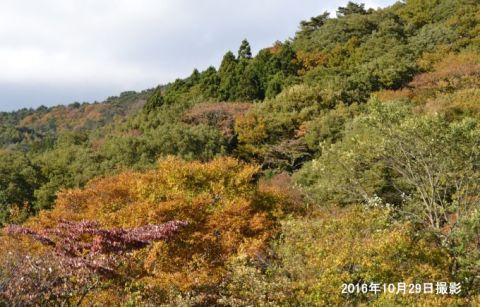 紅葉が始まった赤城森林公園ふれあいの森