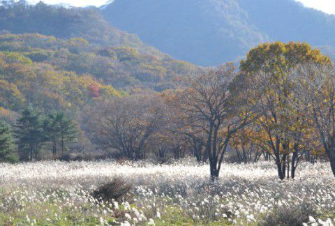 榛名山のススキの景色