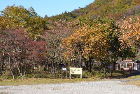 榛名湖畔て紅葉が散ってる木