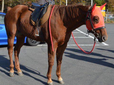 駐車場にいたお馬さん