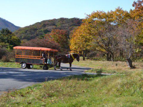 馬車と紅葉