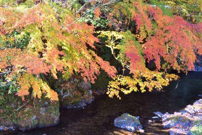 桐生川源流林の紅葉