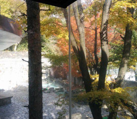 紅葉が見える露天風呂