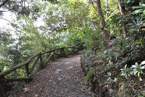 木々に囲まれた山道