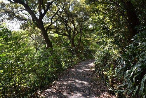 舘山寺の山道