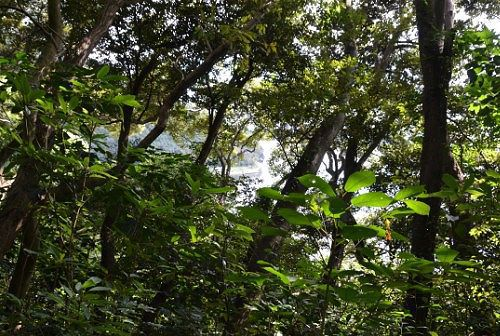 木々の間から見える浜名湖