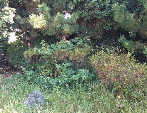太刀洗の池の周りの緑