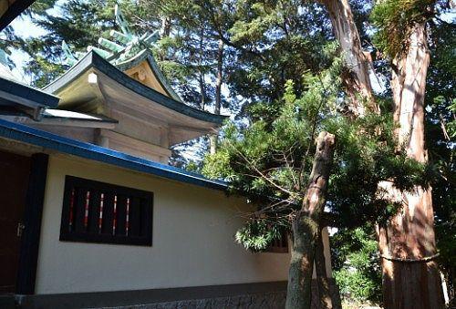 本殿と大きな木