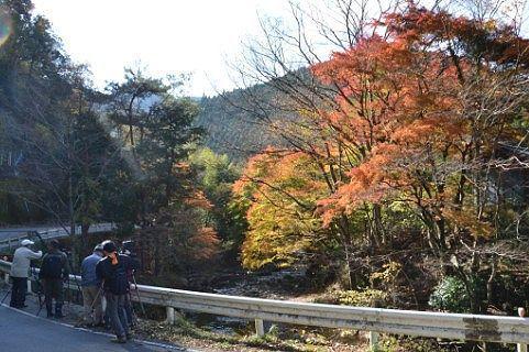 桐生川の紅葉写真を撮りに来てる人たち