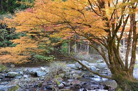 桐生川と紅葉