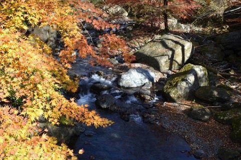 津久原橋から見えた桐生川と紅葉