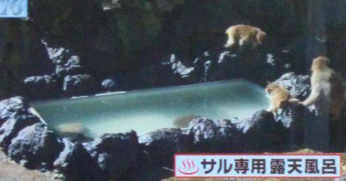 猿専用露天風呂