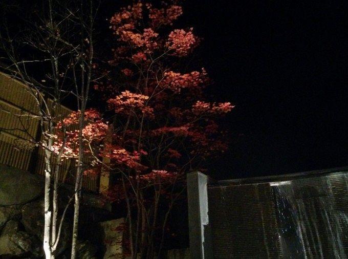 夜の紅葉の景色