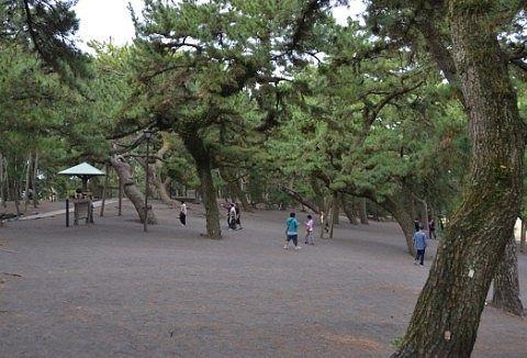 三保松原の様子