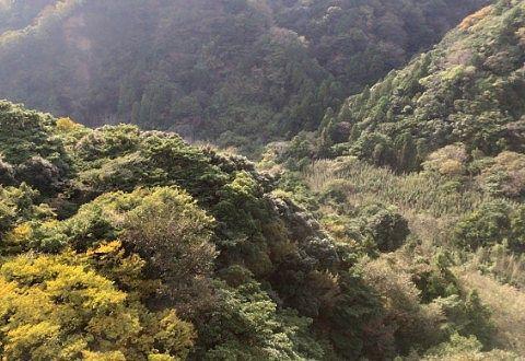 ゴンドラから見えた木々の景色