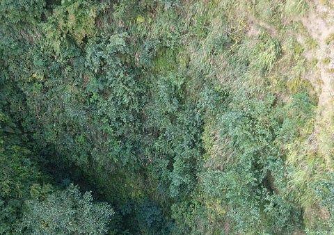 日本平ロープウェイの眼下にある谷の景色