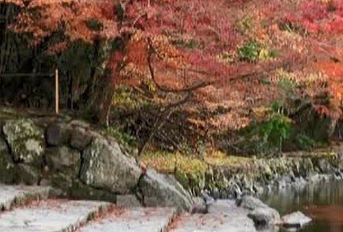 五十鈴川の紅葉の様子