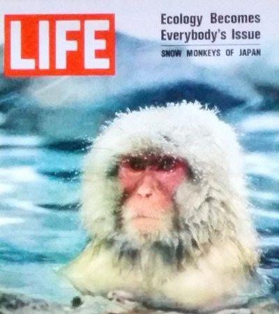 LIFE-Snow monkey