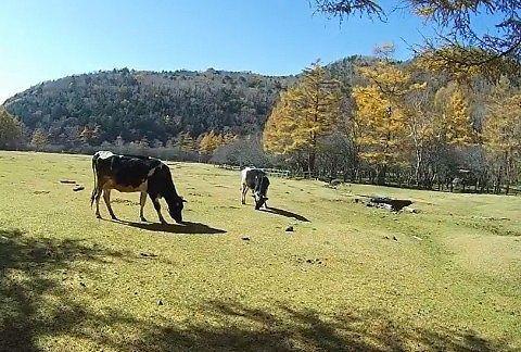 牧場の様子