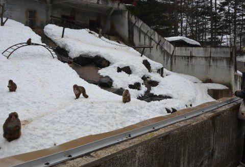 日本猿園の様子