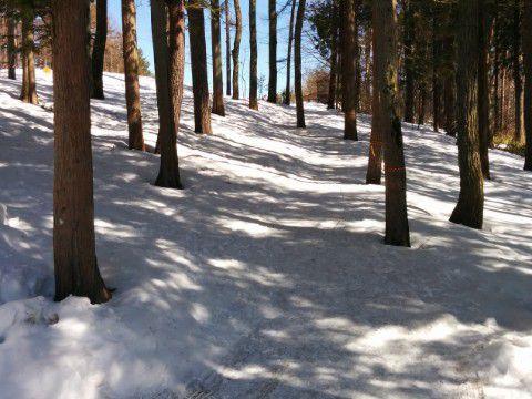 森のスキー場への山道