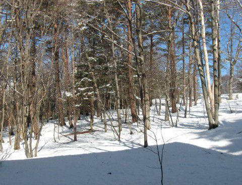 部屋から見た冬景色