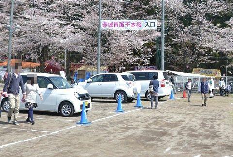 赤城南面千本桜まつり入口