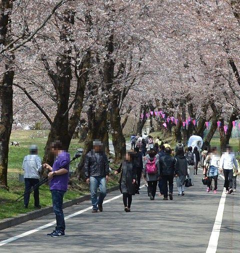 桜並木を歩く大勢の観光客