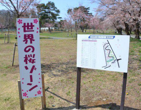 世界の桜ゾーン