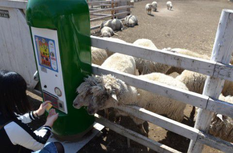 羊とエサの自動販売機
