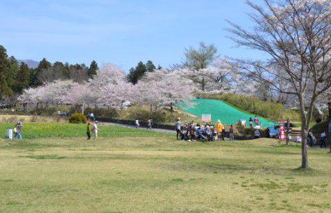桜が咲く場内の様子