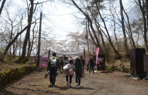 桜ゲート付近の様子